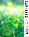キラキラ輝く幸運の四つ葉のクローバー 朝方 縦トリミング 58654973