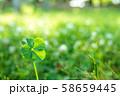 キラキラ輝く幸運の四つ葉のクローバー  58659445