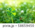 キラキラ輝く幸運の四つ葉のクローバー アップ 58659450