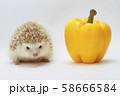 ハリネズミとパプリカ 58666584