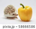 ハリネズミとパプリカ 58666586