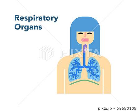 白バックの女性の顔がついた呼吸器官のシンプルなイラスト 58690109