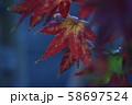 紅葉 58697524