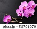 Flower arrangement of orchids. 58701079