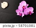 Flower arrangement of orchids. 58701081