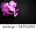 Flower arrangement of orchids. 58701084