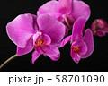 Flower arrangement of orchids. 58701090