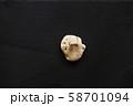 White coral on dark stone background. 58701094