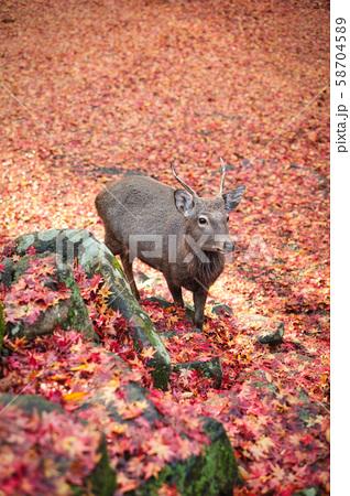 奈良公園の鹿 58704589