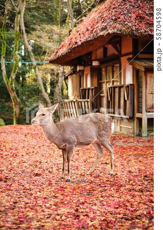 奈良公園の鹿 58704598