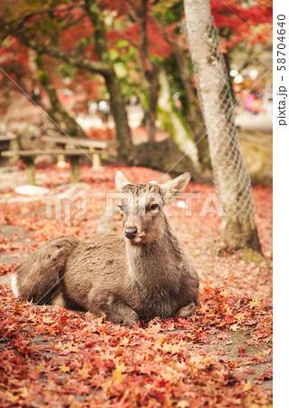 奈良公園の鹿 58704640