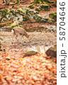 奈良公園の鹿 58704646