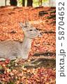 奈良公園の鹿 58704652