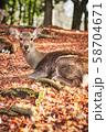 奈良公園の鹿 58704671