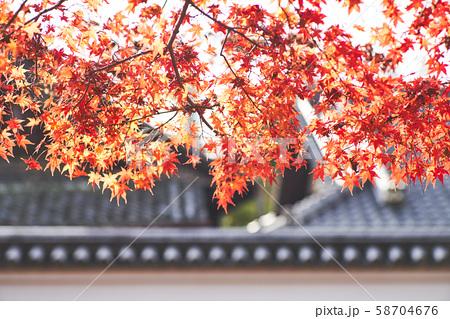 奈良公園の紅葉 58704676