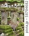 奈良公園の鹿 58704682