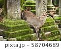 奈良公園の鹿 58704689