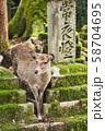 奈良公園の鹿 58704695