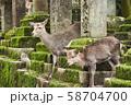 奈良公園の鹿 58704700
