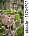 奈良公園の鹿 58704707