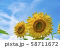 【明野 ヒマワリ畑】 58711672