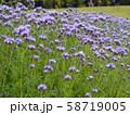 花畑 58719005