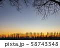 埼玉県 荒川河川敷のメタセコイア並木と夕日 58743348