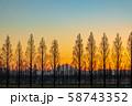 埼玉県 荒川河川敷のメタセコイア並木と夕日 58743352