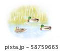 【イラスト】鴨 58759663