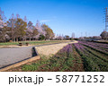 桜の季節 大宮花の丘農林公苑 さいたま市 58771252