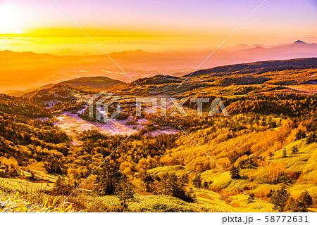 朝日に照らされる芳ヶ平湿原の紅葉・日本国道標高最高地点から 58772631