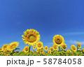 新潟県 津南町 ひまわり 58784058