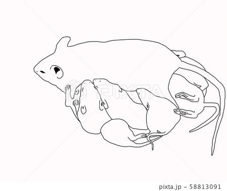 ネズミの親子 58813091