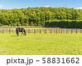 牧場の風景 馬 58831662