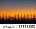 埼玉県 荒川河川敷のメタセコイア並木と富士山の夕景 58858663