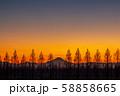 埼玉県 荒川河川敷のメタセコイア並木と富士山の夕景 58858665