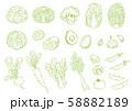 野菜の手描きイラストセット 58882189