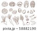 野菜の手描きイラストセット 58882190