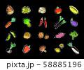 手描き 野菜 果物 セットイラスト 58885196