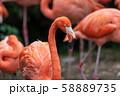 フラミンゴ 東京上野 58889735