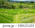 インドネシア バリ島 ジャティルイのライステラス 棚田 58915103