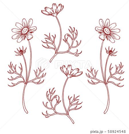 ボールペンで描いたコスモスの装飾素材 58924548