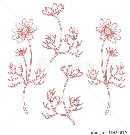 ボールペンで描いたコスモスの装飾素材 58924619