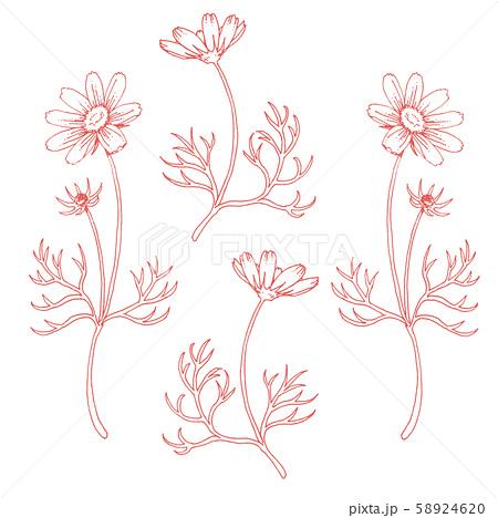ボールペンで描いたコスモスの装飾素材 58924620