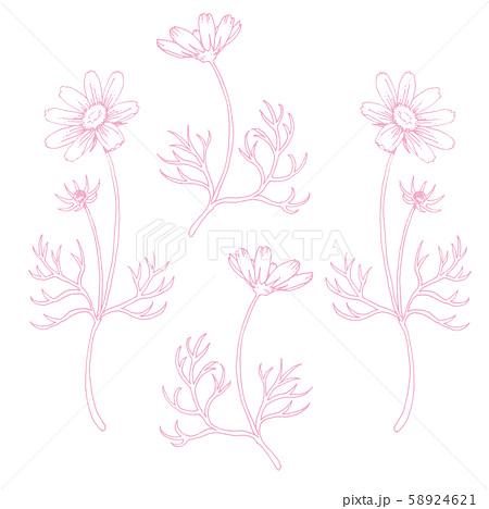 ボールペンで描いたコスモスの装飾素材 58924621