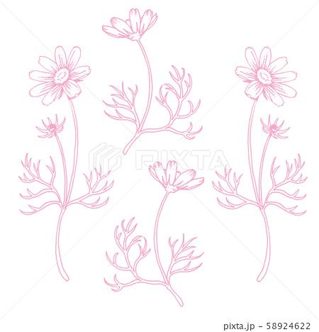 ボールペンで描いたコスモスの装飾素材 58924622