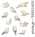小鳥 58931403