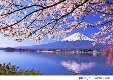 富士山と満開の桜 58961586