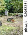 【神奈川県】よこはま動物園ズーラシア アカカンガルー 58962264