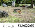 【神奈川県】よこはま動物園ズーラシア アカカンガルー 58962265